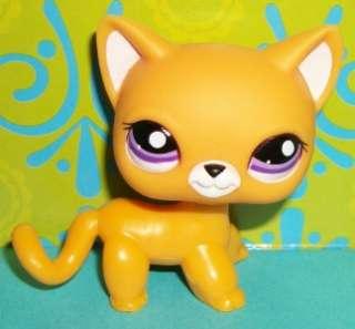 Littlest Pet Shop~#2433 ORANGE SHORT HAIR KITTY CAT Purple Eyes~M149
