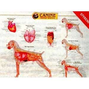 Organ Anatomy Chart (9781587795077): Anatomical Chart Company: Books