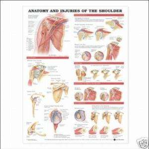 Injuries of the Shoulder Anatomical Chart/Charts/Model