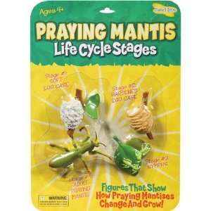 Insect Lore Praying Mantis Life Cycle Stages: Toys & Games