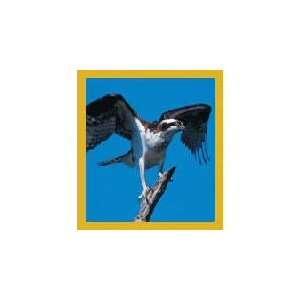New Magnetic Bookmark Osprey High Quality Modern Design