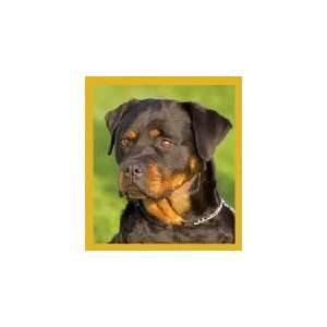 New Magnetic Bookmark Rottweiler Puppy High Quality Modern