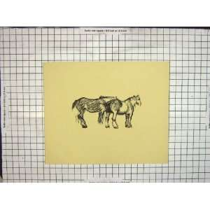 C1900 Antique Drawing Farm Cart Horse Animal
