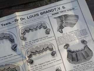 Antique 1897 Dr. Louis Brandt Horse Teeth Poster Age Veterinarian Farm