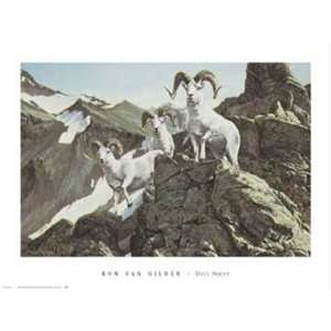 Dall Sheep by Ron Van Gilder 32x24:  Home & Kitchen