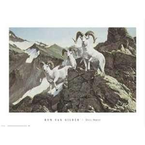 Dall Sheep by Ron Van Gilder 32x24:  Home & Kitchen