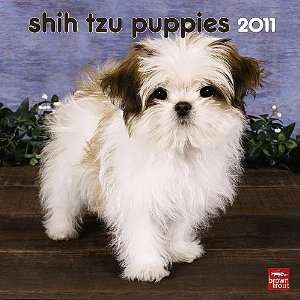 Shih Tzu Puppies 2011 Small Wall Calendar: Office Products