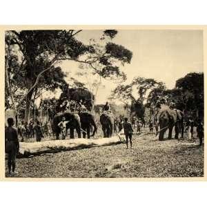 1930 Elephant Farm Api Belgian Congo Africa African